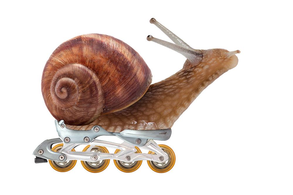 SnailRacer